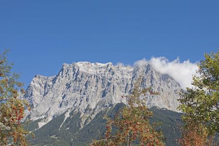 rowan trees flanking the mighty mountain range of the Zugspitze
