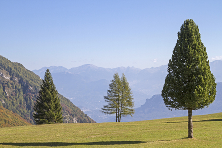 Pine, larch and spruce next to each other on a mountain meadow in Trentino Imagens
