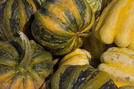 Riche récolte de citrouilles en automne - soupes, ragoûts, compote et bien d'autres plats délicieux attendent le connaisseur
