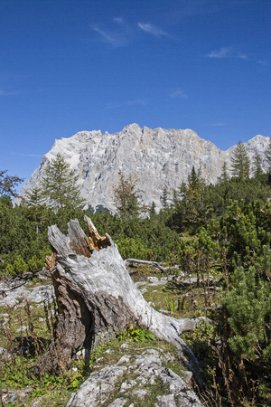 Mighty rootstock of the mighty massif of the Zugspitze