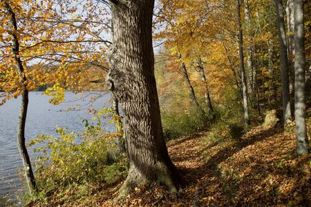 Tour around the idyllic Hackensee in the autumn - a nature experience for all seeking relaxation and solitude