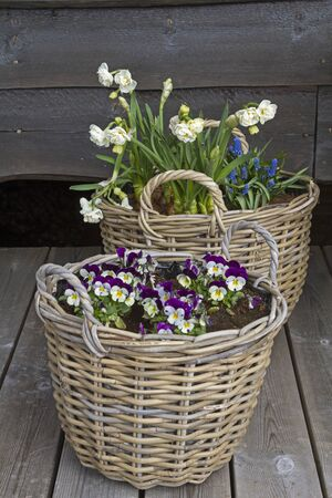 Spring flowers lovingly arranged in baskets adorn the terrace