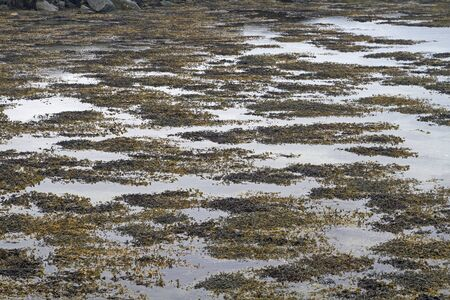 In the fjord is low tide, the water has retreated