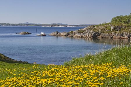 Dandelion meadow at Naeroysundet, which is used by many ships to get from Rorvik into the open Atlantic