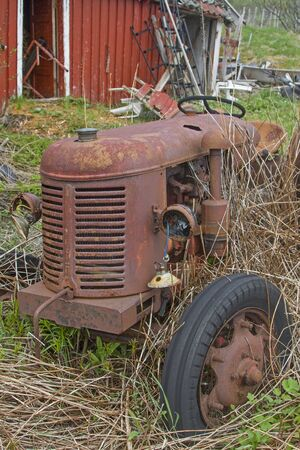 Rusted parked tractor in a small Norwegian village hides behind grass and reeds