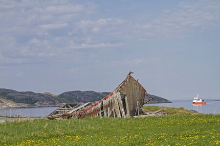 Dilapidated barn situated in the middle of a dandelion meadow on the banks of the Nordsaltenfjord