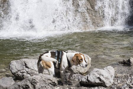 Beagle also visits the Glasbach waterfall in Jachenau on his tour of the Rabenkopf