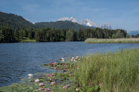 Blooming water lilies in the Geroldsee, beyond the Wetterstein Mountains with the Zugspitze Reklamní fotografie