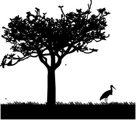 wader: Stork in garden or park in spring,silhouette