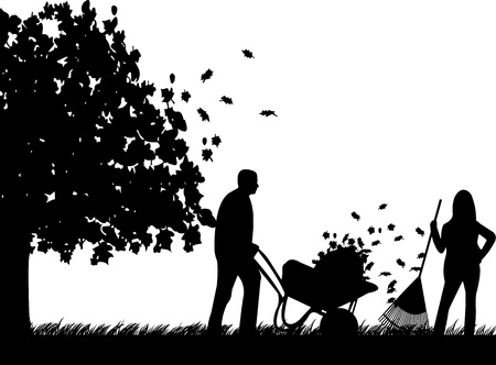 raking: Couple raking leaves in autumn or fall in garden or yard under the tree silhouette