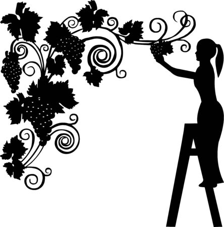 Portrait of a young girl cutting grapes silhouette, isolated on white background Vector
