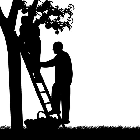 Young men up on a ladder picking apples from an apple tree silhouette Vector