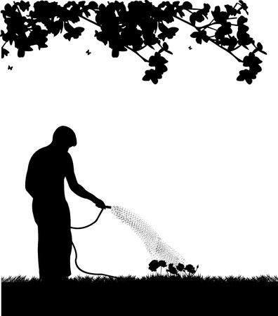 Man gardener watering flowers, roses with hose in spring silhouette
