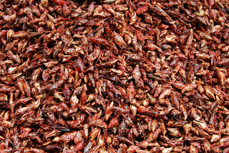 grasshoppers: chapulines enchilados, edible grasshoppers with chili; typical food from Oaxaca, mexico