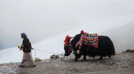 nomadic: tibet, Kamba the pass, august 2010 - tibetan woman with her yaks