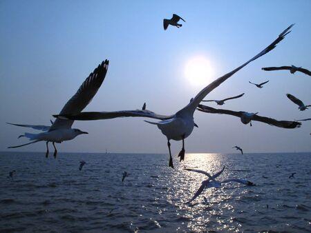 Bird Zdjęcie Seryjne
