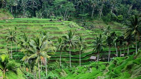 Kintamani, Bali, Indonesia