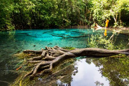 marsh emerald Krabi Thailand photo