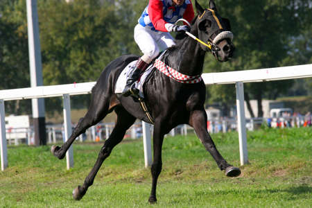 blinders: Thoroughbred galloping, just one leg on the ground Stock Photo
