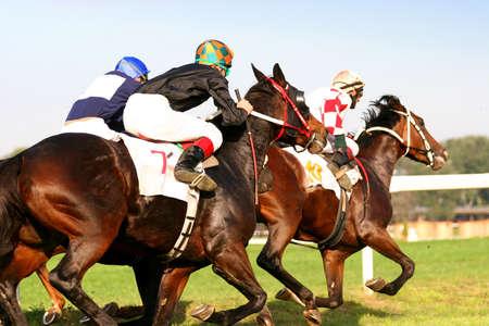 Thoroughbred horserace photo