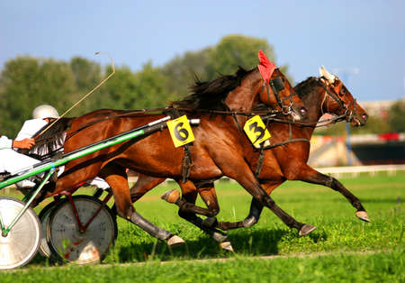 filly: Two trotting horses Stock Photo