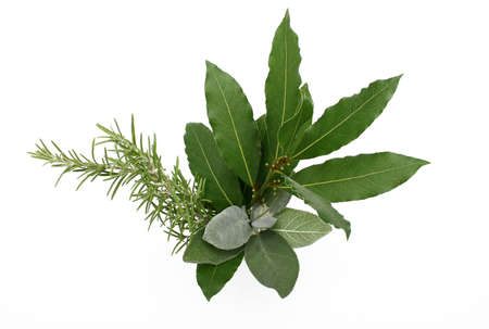Rosemary, bay laurel and sage, isolated photo