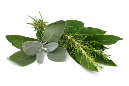 saliva: Rosemary, bay laurel and sage on white background Stock Photo