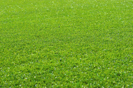 Artificial grass background Stock Photo - 666373