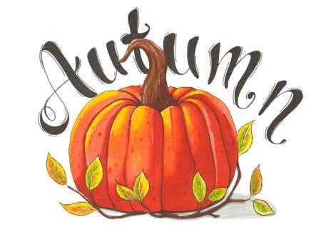 Autumn illustration. Drawn pumpkin with the word Autumn.