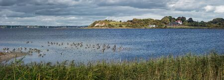 Panoramic view of the cliffs of the peninsula Holnis on the Flensburg Fjord. In the foreground gray geese are resting on a sandbank behind a reed belt