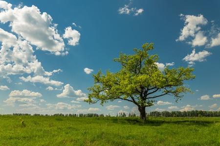 緑の草原と青い空の雲の前に固体のツリー。