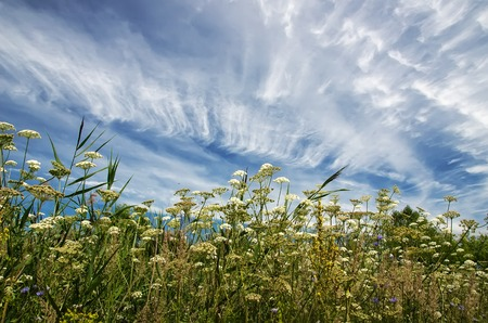 cirrus: Vector blurred nature background with meadow grass and blue sky with clouds Stock Photo