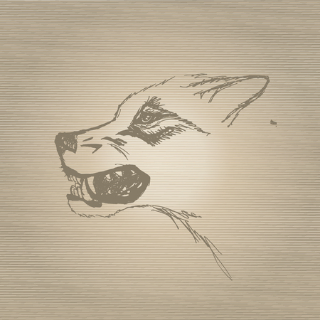 snarling:  sketch snarling wolfs muzzle