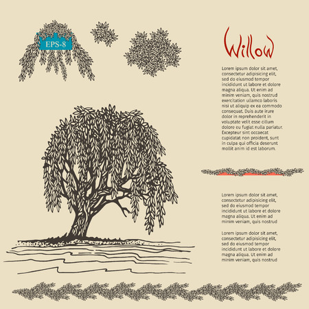 decorative Willow tree. illustration.