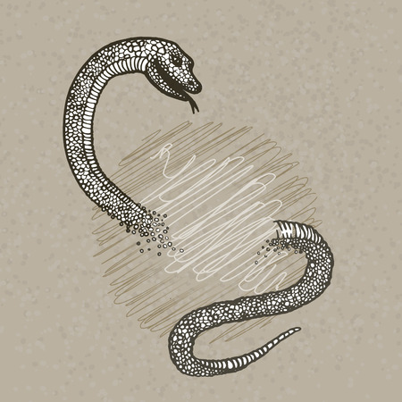 constrictor: Hand drawn snake on beije background Illustration