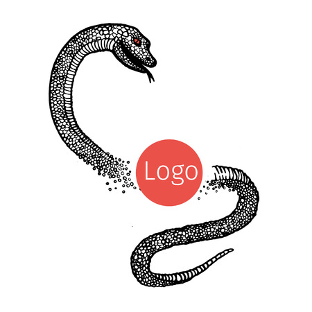 Hand drawn illustrations of a snake.