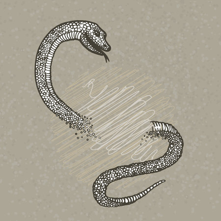 boa constrictor: Hand drawn snake on beije background.