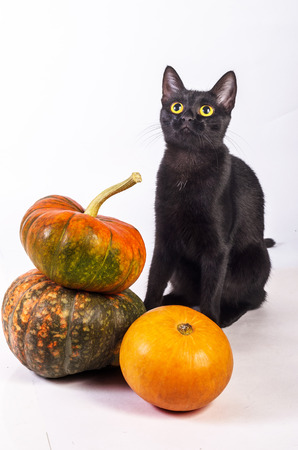 watching horror: young black cat sitting next to pumpkin on white background