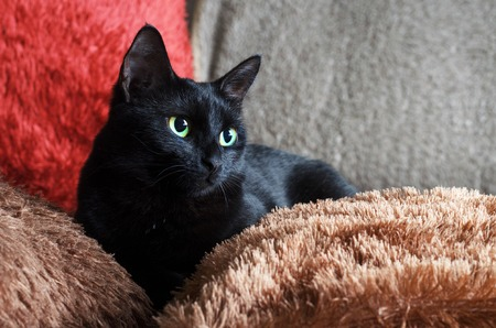 a small black green-eyed cat lies on red and brown fluffy pillows