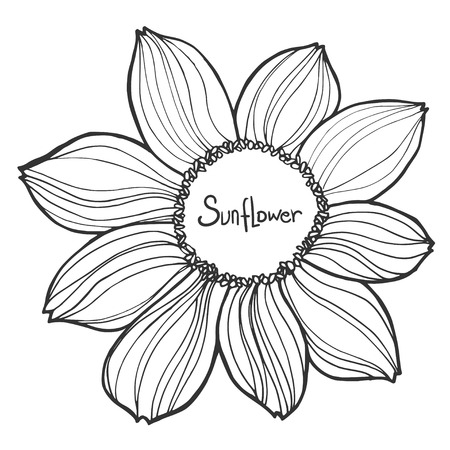 Beautiful black and white vector sunflower isolated on white background. Hand-drawn contour lines and strokes.