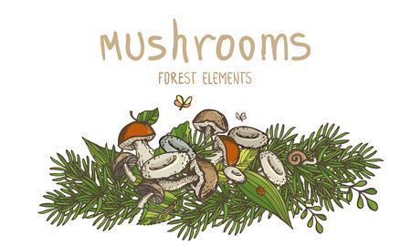 Mushrooms and forest elements. Vector multicolor sketched set Illustration