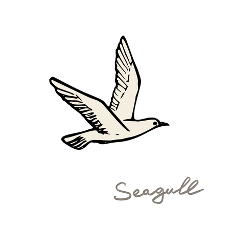 seagull in the sky vector illustration.