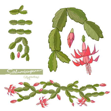 Hand drawn Elements of Christmas cactus and brushes. Vector illustration. Stock Photo