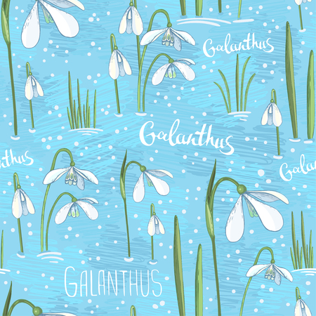 Vector spring seamless background with primroses. White hand drawn flowers on a blue background. Background with snowdrops for wrapping paper or a greeting card for the spring holidays. Eps-8. Illustration