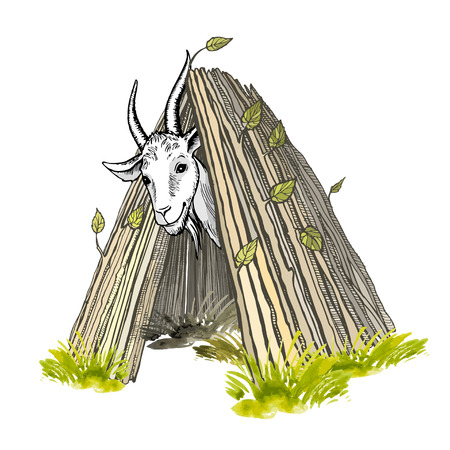 A contented white goat with horns and a beard, looking out of the hut. Colored hand-painted vector drawing. Illustration