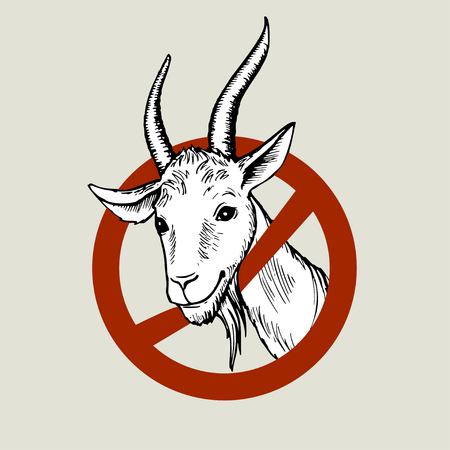 Hand drawn head of a white goat, peeking out of the prohibitory road sign. Colored hand-painted vector drawing.