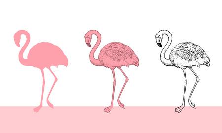 Flamingo bird illustration design on white background. Ilustrace