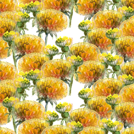 Seamless pattern of watercolor yellow dandelions on white background