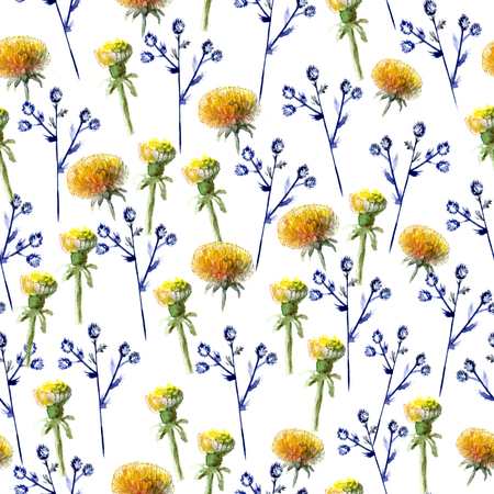 Seamless pattern of watercolor yellow dandelions and blue prickly eryngium on white background Reklamní fotografie