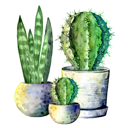 The composition of the three cacti in pots. Isolate on white background. Watercolor hand drawn illustration